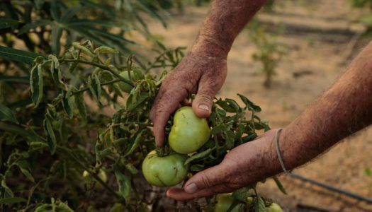 Revitalização da Casa de Mudas: uma nova perspectiva para os agricultores de Seropédica